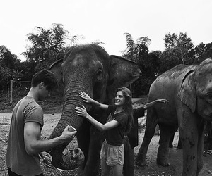 animal, couple, and elephant image