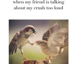 crush, lol, and true image