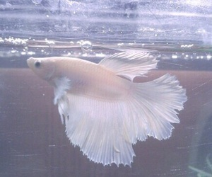 fish, pale, and water image
