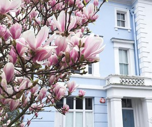 beauty, blossom, and building image