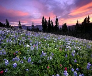 flowers, landscape, and wildflowers image
