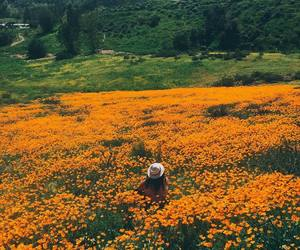beauty, chic, and flower field image