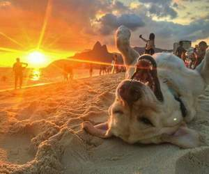 beach, sunset, and cute image