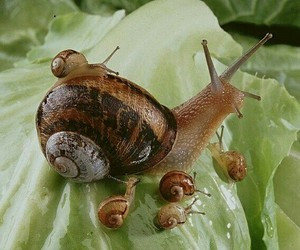 snail, animal, and nature image