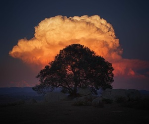 nature, tree, and clouds image