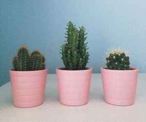 cactus, pink, and tumblr image