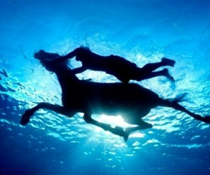 horse, water, and swimming image