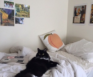 cat, room, and posters image