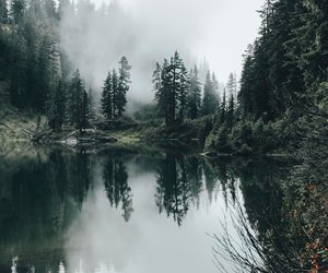 nature, forest, and adventure image