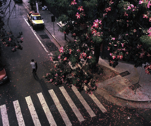 flowers, street, and pink image