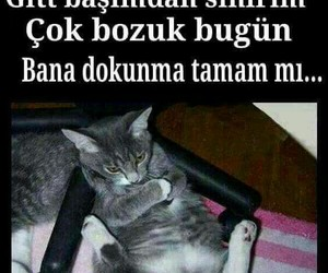 cat, komik, and Turkish image