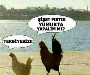 Turkish, resimler, and komik image