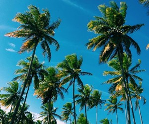 summer, travel, and tropical image