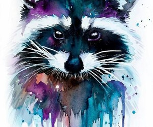colour, racoon, and art image