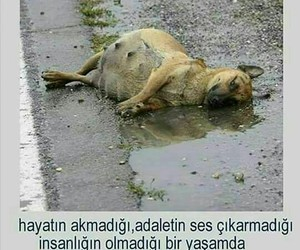 turkce, resimler, and hayvan image