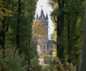 castle, forest, and princess image