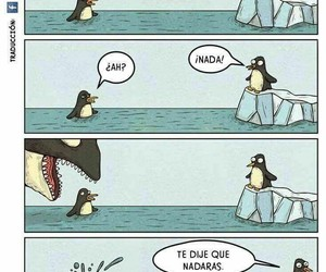 penguin and funny image