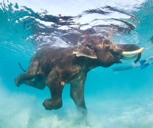 elephant, sea, and summer image