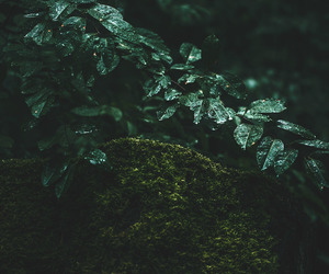 dark, green, and leaf image