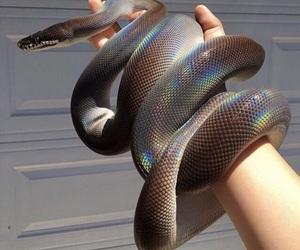 animal, snake, and tumblr image