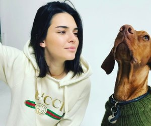kendall jenner, dog, and gucci image