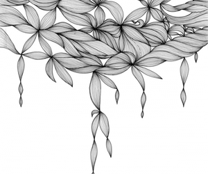 flower and lineart image