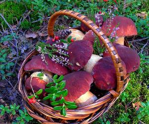aesthetic, mushroom, and nature image