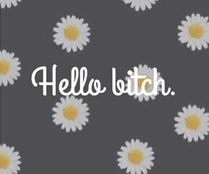 hello bitch image