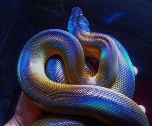 snake, colors, and holographic image