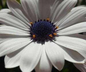 fiori image
