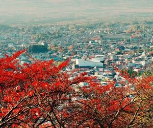 tree, city, and mountains image