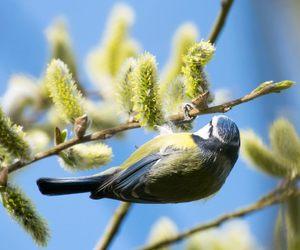 bird, garden, and nature image