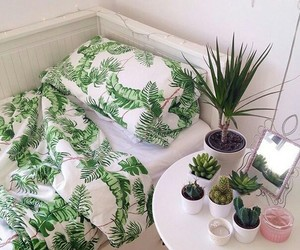 plants, bedroom, and cactus image