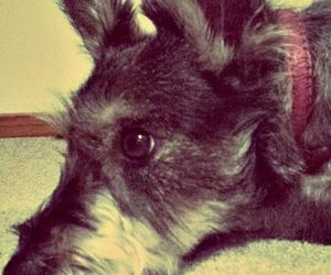 dog, pet, and tumblr image