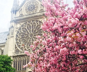 beautiful, flowers, and france image