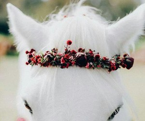 horse, white, and flowers image