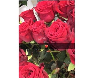 amour, roses, and hob image