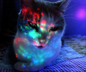 cat, little cat, and colors image