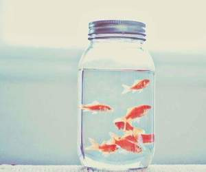 fish, golden fish, and water image