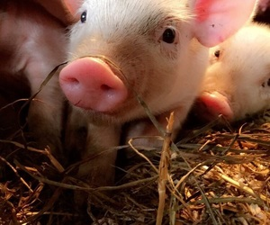 animals, baby, and barn image