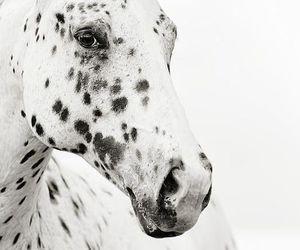black, horse, and polka dot image