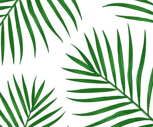 design, green, and leaves image