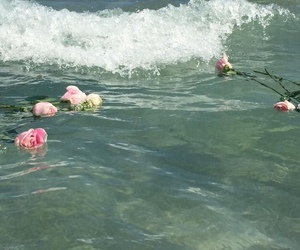 rose, flowers, and water image