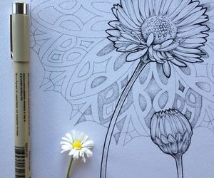 art, drawing, and pencil flower image