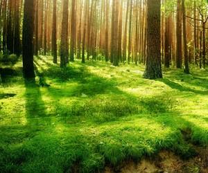nature and 高画質 image