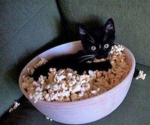 cat, cute, and popcorn image