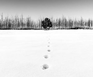 b&w, winter, and photography image