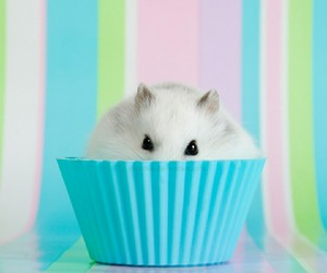 hamster, cupcake, and animal image
