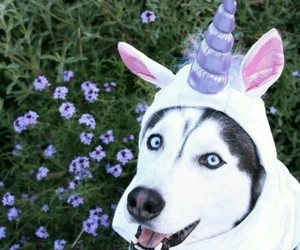dog, unicorn, and animal image