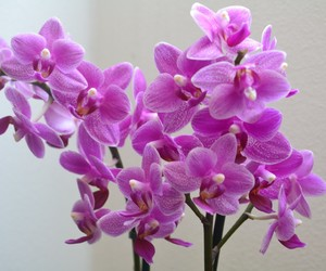 blossom, orchids, and pink image